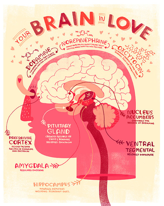 Your_brain_in_love